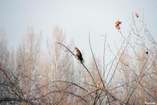 Avifauna sulle rive del fiume (Foto Paola Cominetti)