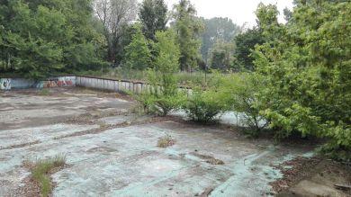 Le radici di arbusti infestanti si sono aperte varchi nel cemento