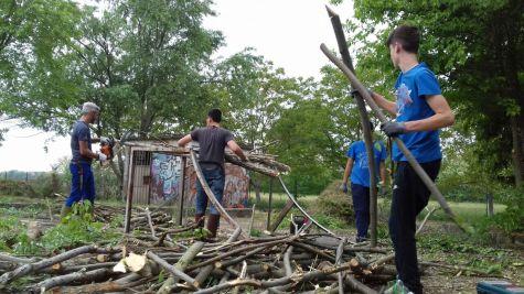 taglio legna (6)